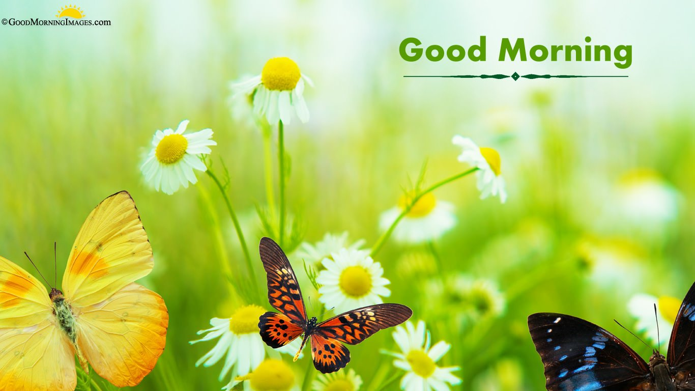 HD Butterfly With Flowers Good Morning Wallpaper