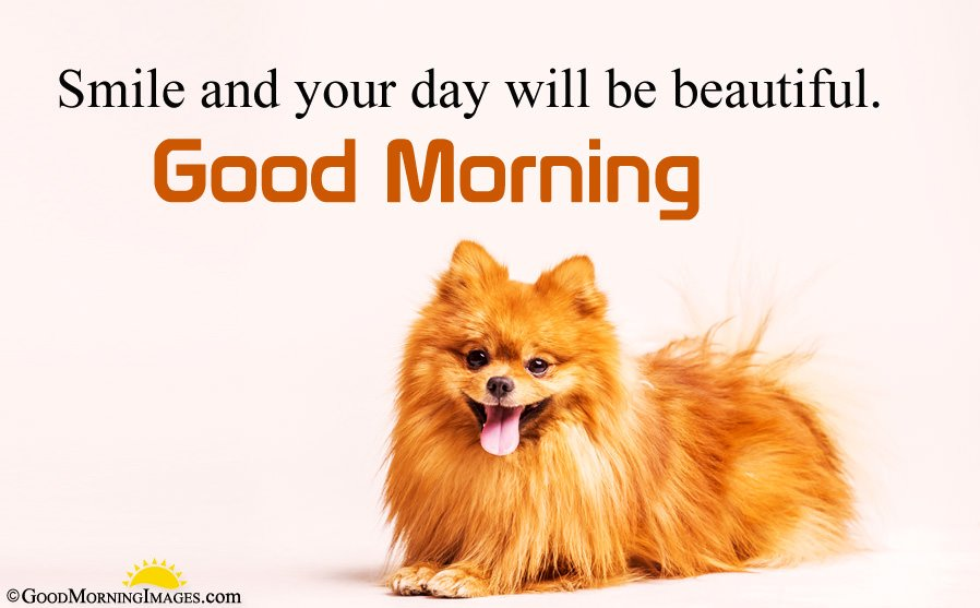 Hd Cute Dog Picture With Morning Image