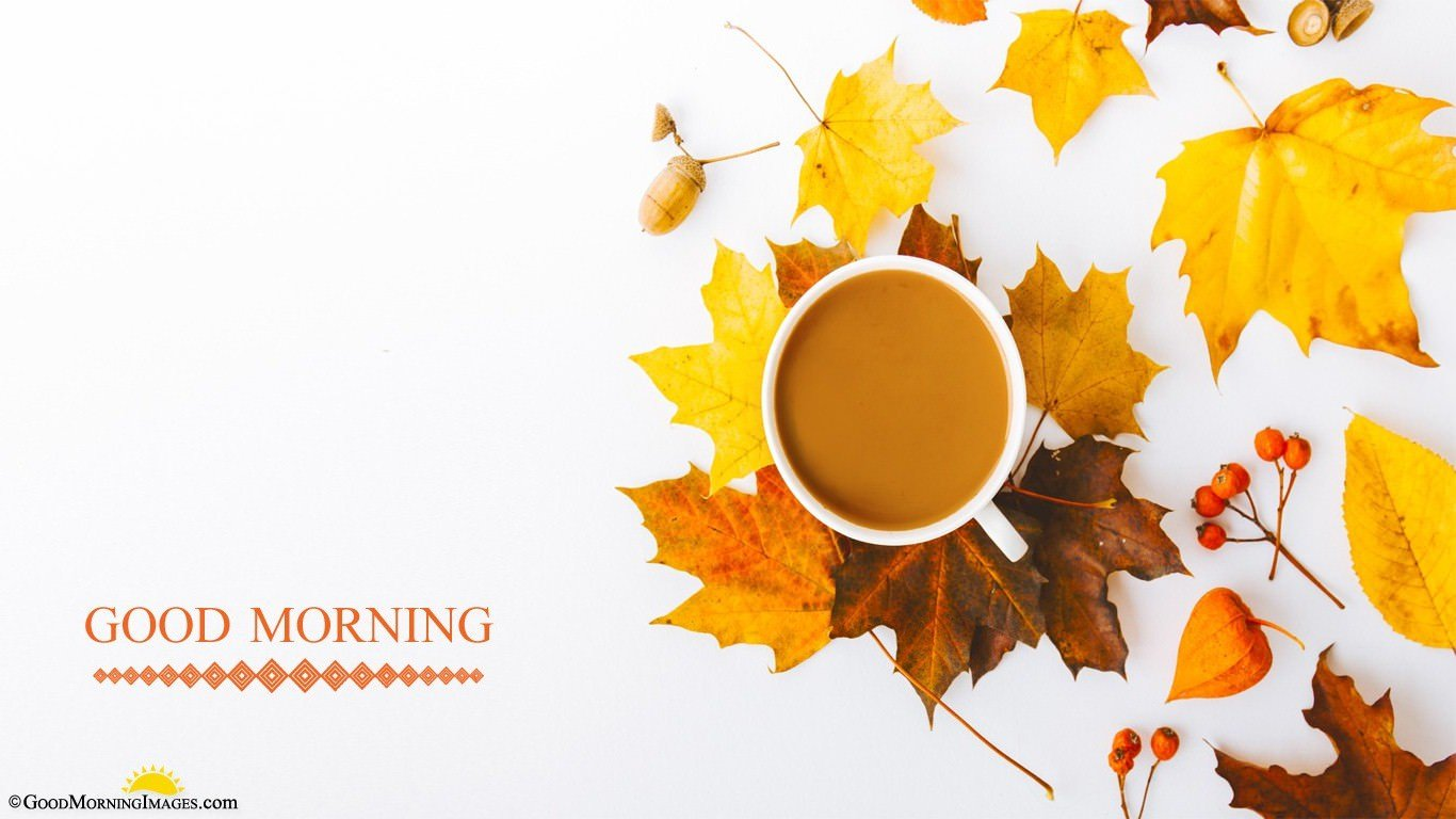 Morning Tea Cup Full HD Background Wallpaper For Laptop