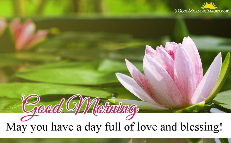 New Blessing Love Message With Flower Hd Picture
