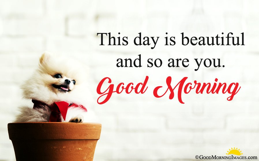Very Cute Puppy Full Hd Image With Good Morning Wishes